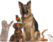 Do You Need A Pet? How to Pick a Pet That\'s Best For You