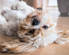"""The """"Paw-sitives"""" of Pet Ownership: Which Pets to Consider & Why"""